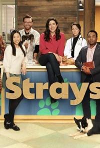 Strays Tv Series